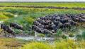 Africa-Wildebeest Crossing