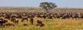 Africa-Wildebeest Everywhere