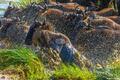 Africa-Wildebeest Mayhem