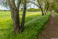 american river, parkway, sacramento county, walking trail