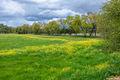 american river parkway, sacramento county, spring bloom