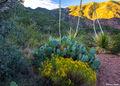 Chisos Basin Sunrise print