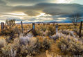 desert sagebrush, black rock desert, nevada