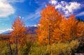 Fall Colors in Wyoming print