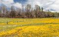 el dorado county, rural, georgetown road, sierra foothills, spring colors