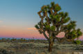 Joshua Tree Sunset print