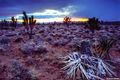 Mojave Desert Snow print