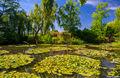 Monet's Garden print