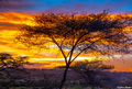 Ndutu Camp Sunset print