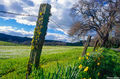 Rural Fence With Flowers print