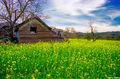 Rural Scene in Napa Valley print