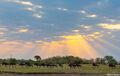 wildebeest running, serengeti, africa