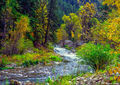 Spearfish Creek print