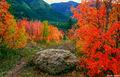 Wyoming Color print