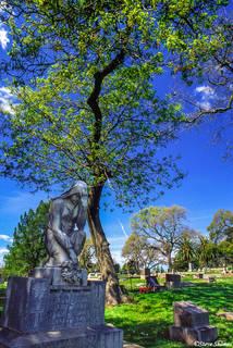 Napa Cemetery