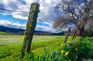 Rural Fence With Flowers