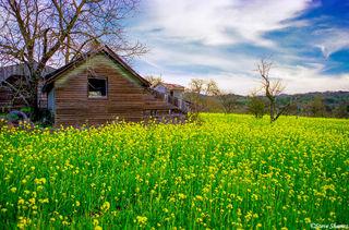 Rural Scene in Napa Valley