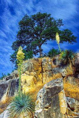 kings canyon, national park, yucca plants, cloud streaked sky