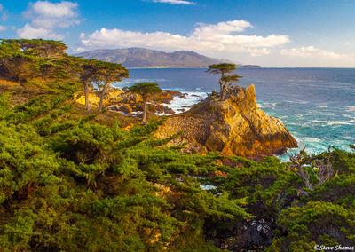lone cypress tree, carmel, california