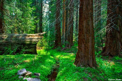 Sequoia | Kings Canyon