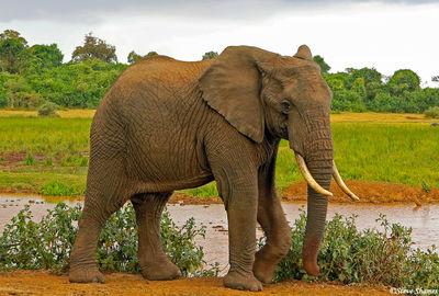 aberdare elephant, kenya, the ark, waterhole