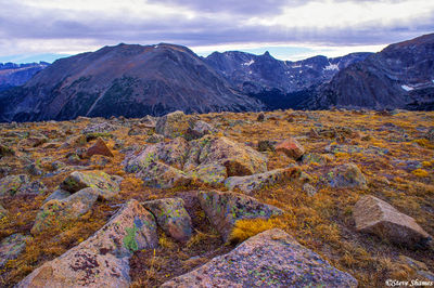 rocky mountain national park, colorado, above the timberline, colorful lichen