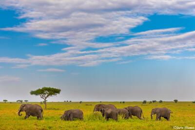 Africa-Elephants on the Plains