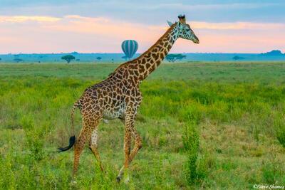 Africa-Serengeti Hot Air Balloon