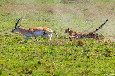 Africa-Cheetah Chase 05