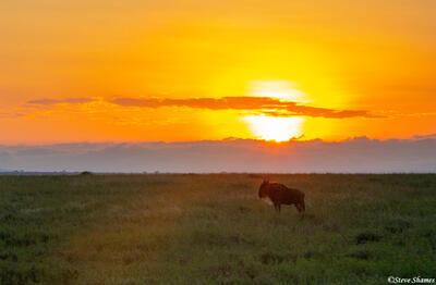 Africa-Wildebeest Sunrise