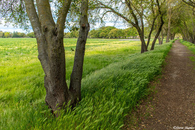 american river, parkway, sacramento county, walking trail