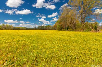 Arkansas Spring Colors