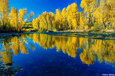 ketchum idaho, fall colors, big wood river