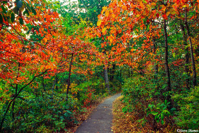 fall colors, blue ridge parkway trail, virginia