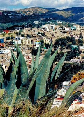 guanajuato, mexico, cactus graffiti
