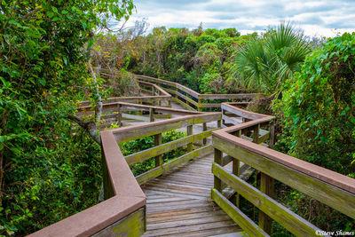 canaveral national seashore, florida, thick vegetation