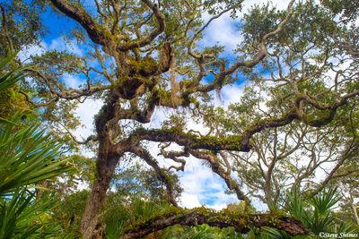 canaveral national seashore, florida, tangled branches