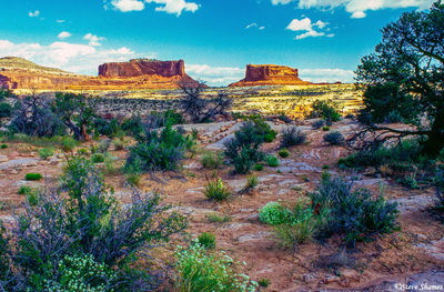 canyonlands, national park, utah, buttes