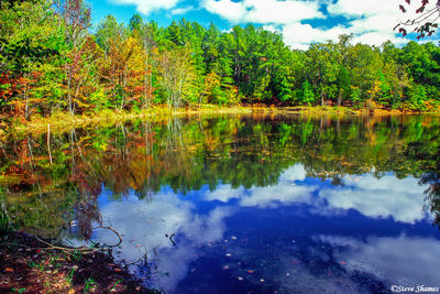 cedar pond, land between the lakes, kentucky, the trace