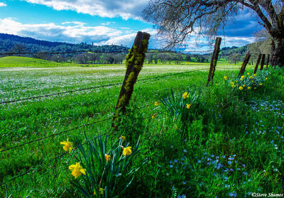 napa county, california, country scene