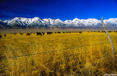 lone pine, eastern california, snow covered mountains
