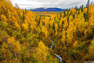 george parks highway, alaska, fall colors