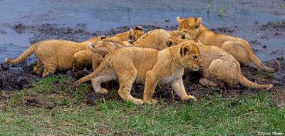 serengeti, national park, tanzania