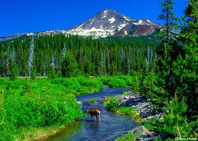 bend, oregon, deer, broken top mountain