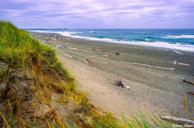 oregon coast, driftwood, beach