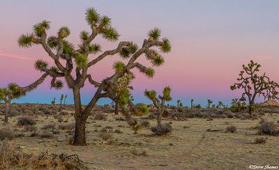 joshua tree, national park, southern california