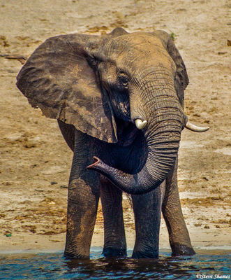 chobe national park, river, elephant, botswana