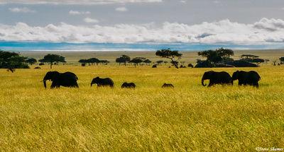 elephant silhouette, serengeti, tanzania