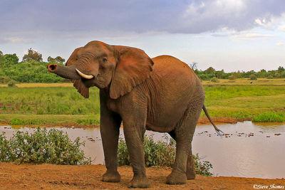 aberdare national park, kenya, elephant, the ark