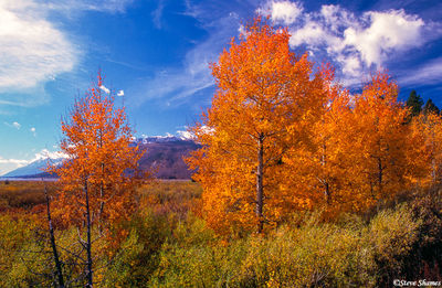 jackson lake, wyoming, fall colors
